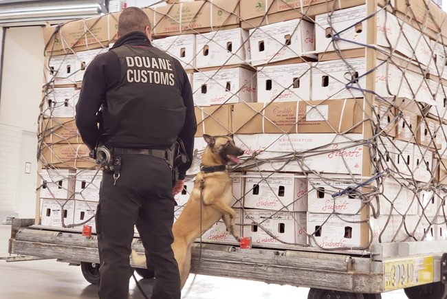 Amsterdam's Schiphol airport has implemented digital cargo inspection and monitoring, but trained customs employees — and dogs — remain essential.