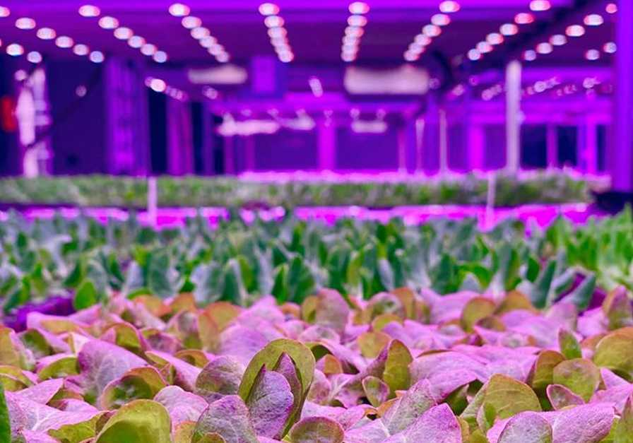 Kalera vertical farm in Orlando produce supply chain