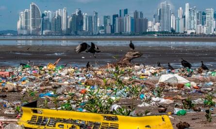 Vultures survey waste at Costa del Este in Panama City.