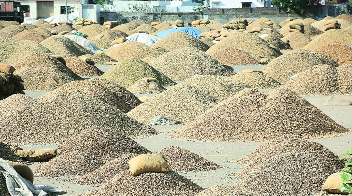groundnut procurement, groundnut procurement in gujarat, groundnut procurement packing requirements, groundnut procurement packing requirements lowered, indian express news