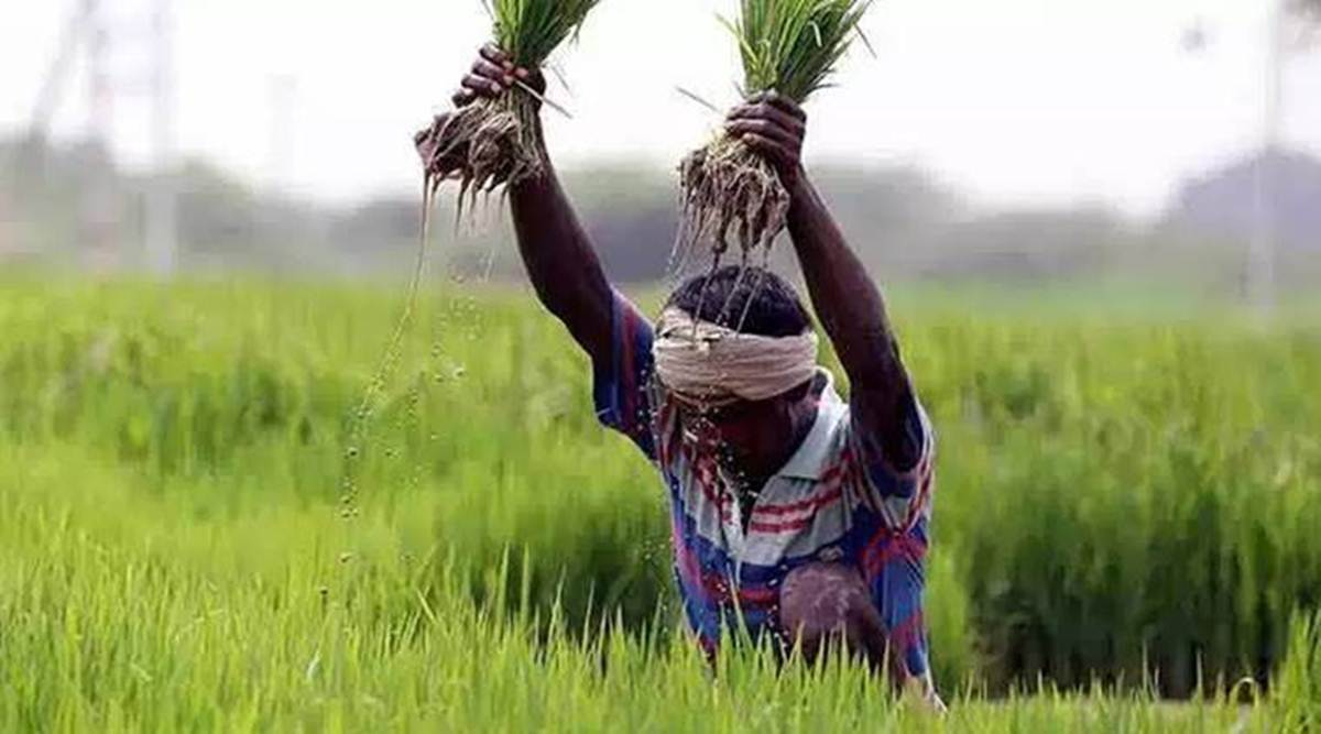 Big farmers pocket lion's share of farm power subsidy