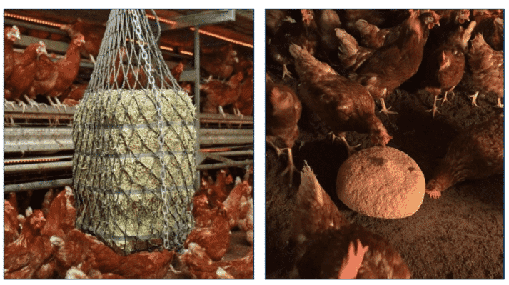 Figure 6. House enrichments: alfalfa (Lucerne) bales (left) and a pecking block (right).