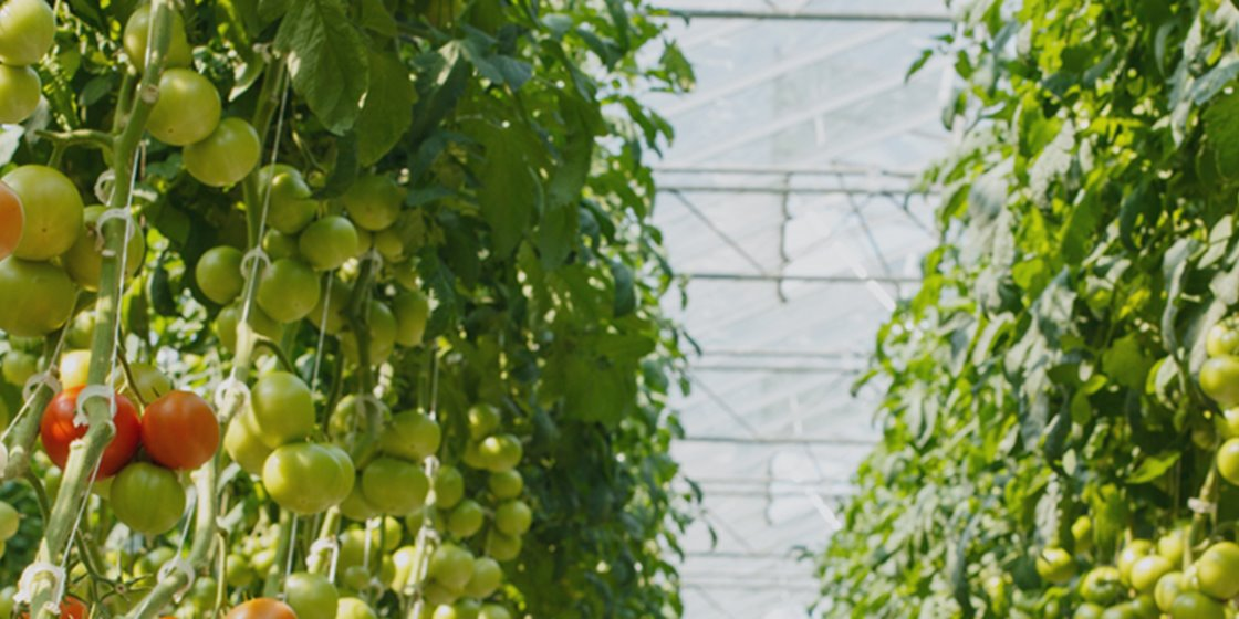 Supply chain management software for every food company