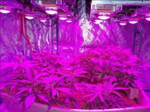 Plant Factory Grow Lights