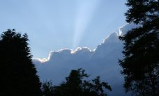 silver lining procurement predictions