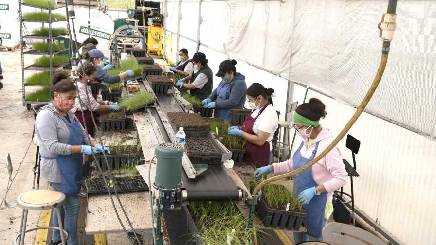 North Creek Nurseries Production Line