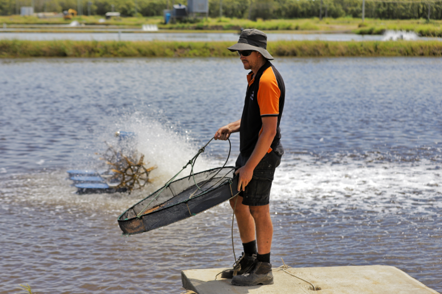 A man holding a net, standing on a wharf.
